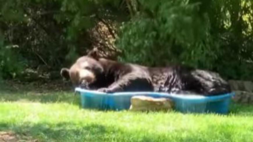 Une femme découvre un ours dans sa piscine pour enfants (vidéo)
